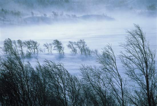 Cold Wind | Livin' Small