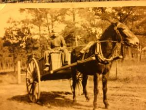 Granddaddy and the Mule