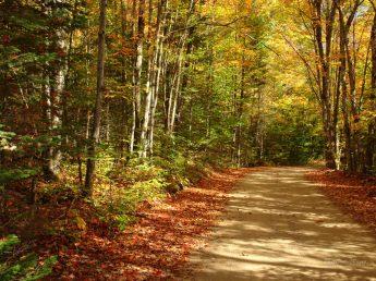 autumn_scene_9